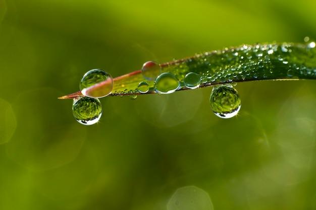 Tło świeżej zielonej trawie z kropli wody zbliżenie