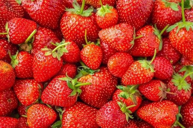 Tło świeżych organicznych owoców truskawek zbliżenie widoku z góry