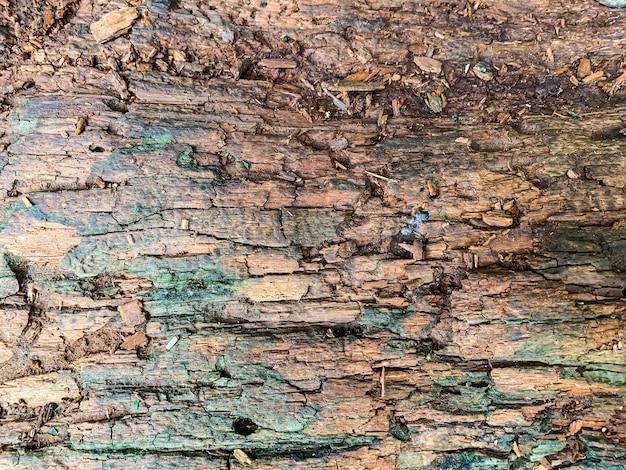 Tło, tekstura starej, gnijącej, uszkodzonej powierzchni drewnianej.