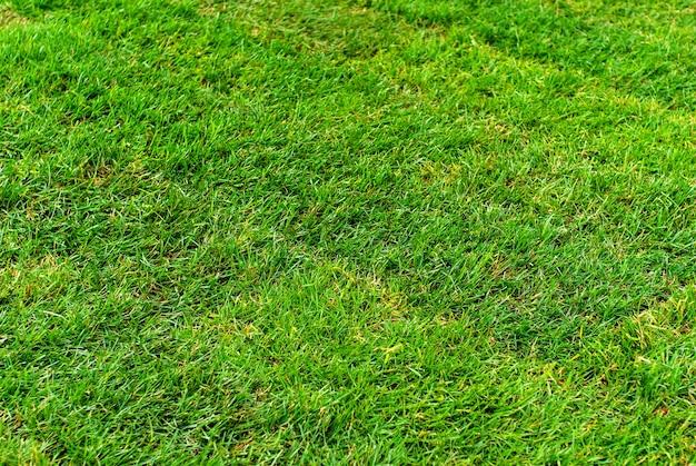 Tło, tekstura - świeżo ułożony trawnik z walcowanej murawy