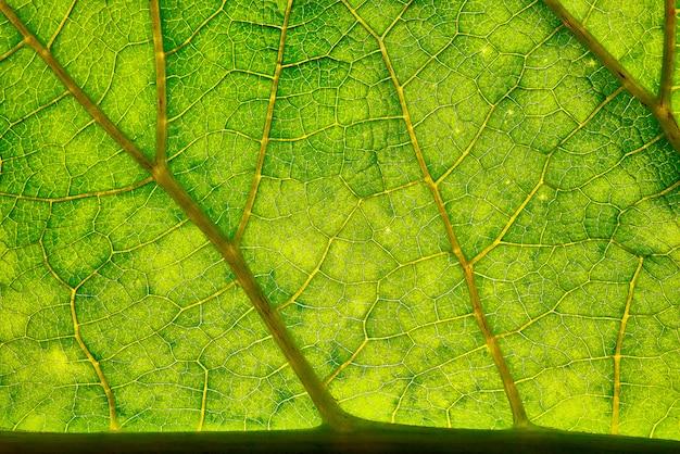 Tło tekstura zielony liść.