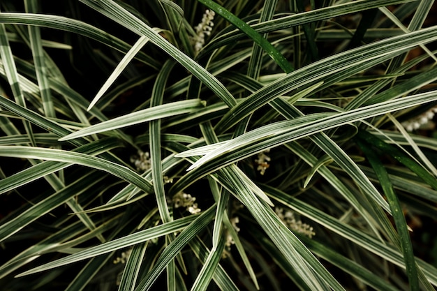 Tło trawa i liście