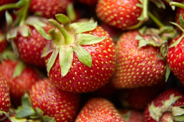 Tło truskawka, zbiory czerwonych dojrzałych jagód letnich