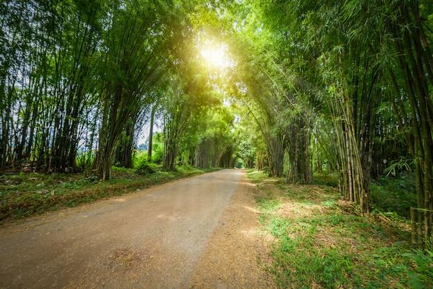 Tło tunelu bambusowego