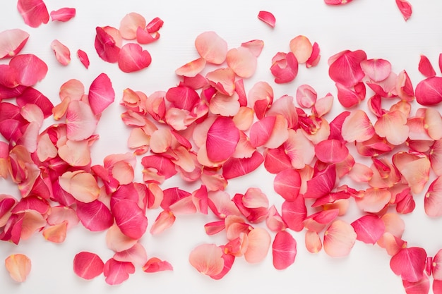 Tło valentine. płatki kwiatów róży na białym tle.