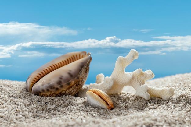 Tło wakacje lato plaża z muszelek i piasku przeciw błękitne niebo z chmurami zbliżenie bac