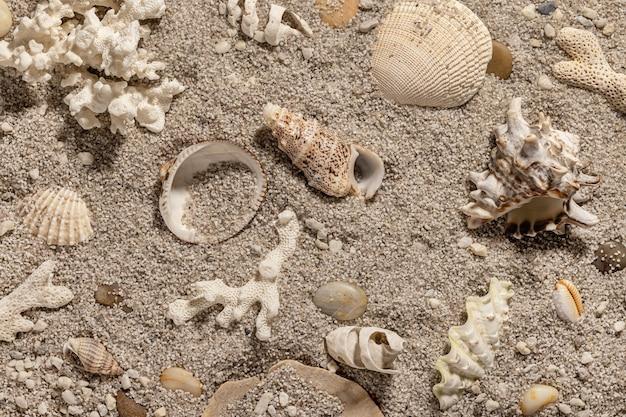 Tło wakacje na plaży z muszelkami i widokiem z góry na piasek
