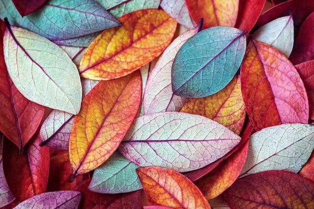 Tło wielobarwny liści jesienią
