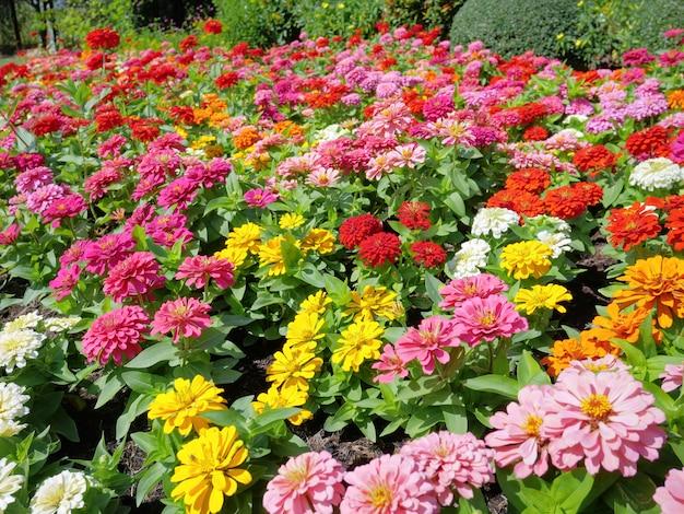 Tło wielokolorowe kwiaty w polu w czasie dnia