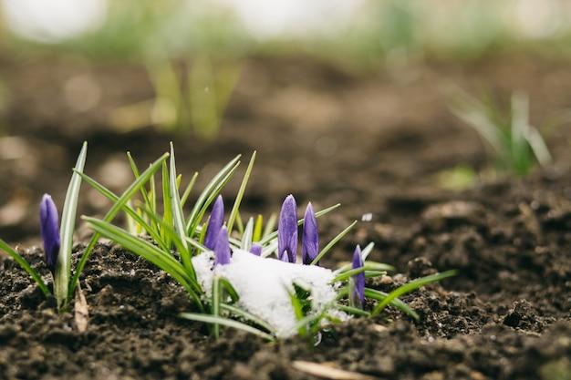 Tło wiosennych kwiatów