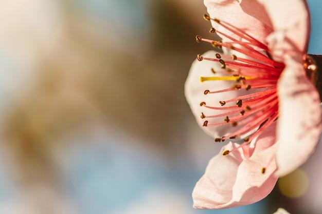 Tło wiosna różowe kwiaty