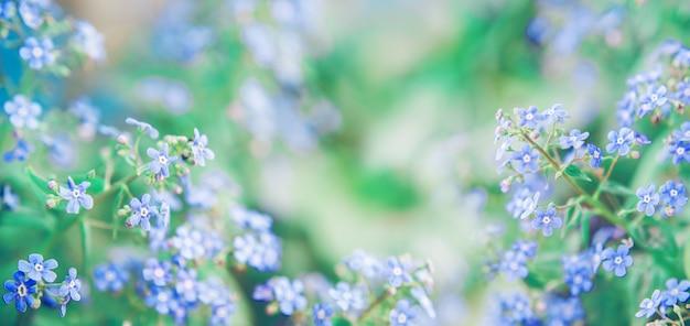 Tło wiosna z niebieskimi kwiatami zapomnij o mnie i zieleni