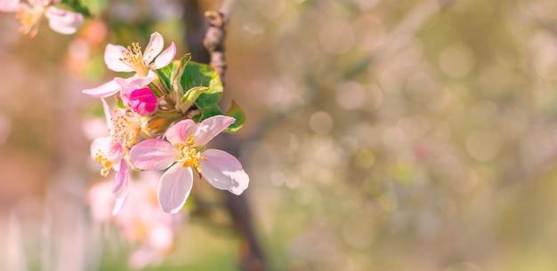 Tło wiosna z różowe kwiaty