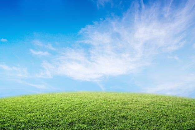 Tło wizerunek luksusowy trawy pole pod niebieskim niebem