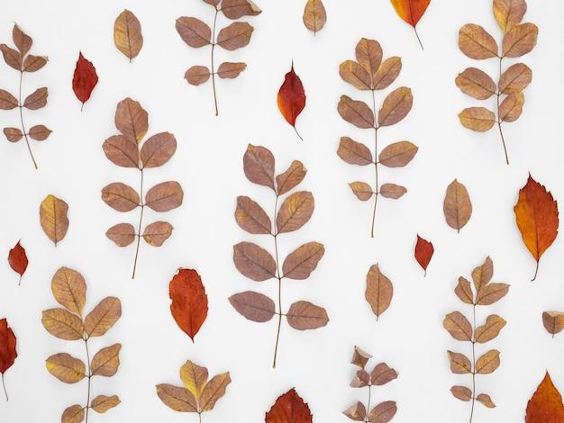 Tło wzór liści