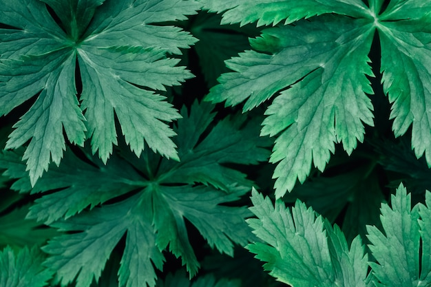 Tło wzór zielonych liści