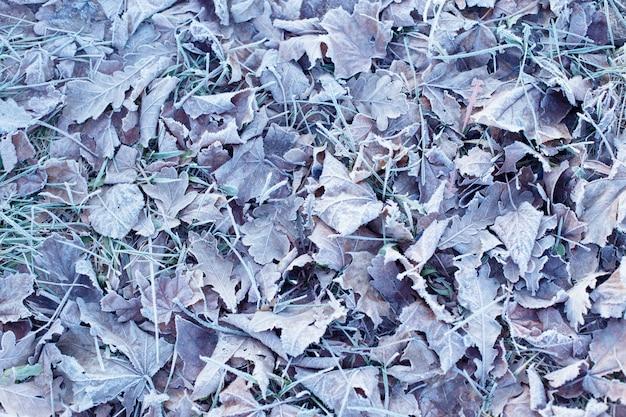 Tło z jesiennych mrożonych liści