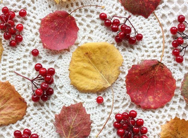 Tło z jesiennymi liśćmi osiki i jagodami kaliny na lekkim koronkowym obrusie,