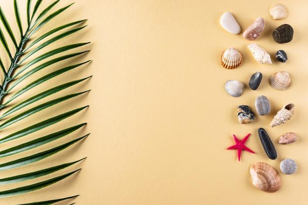 Tło z kolekcją kamieni muszelek i liści palmowych