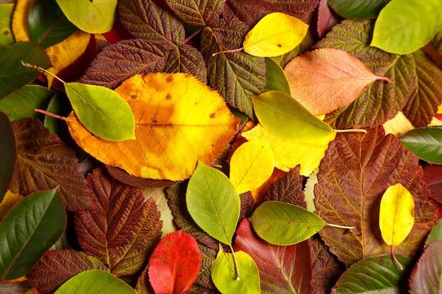 Tło z kolorowych liści jesienią