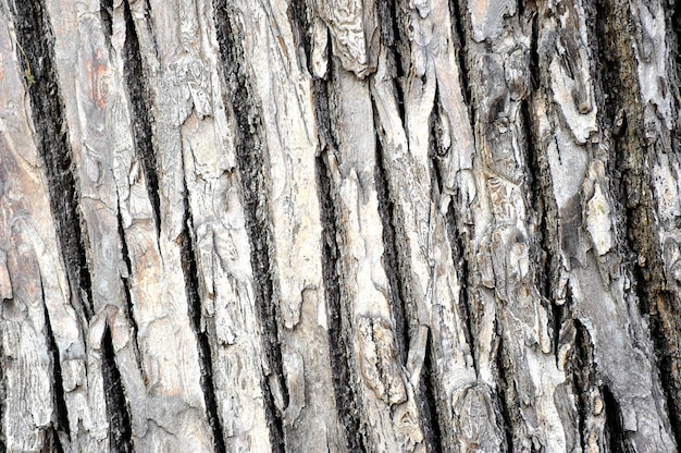 Tło z kory drzewa