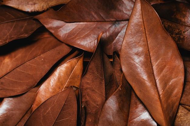 Tło z suchych liści