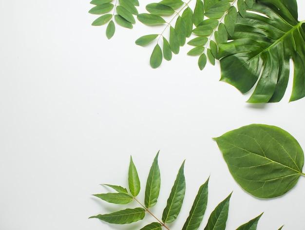 Tło z tropikalnych zielonych liści na białym papierze. skopiuj miejsce. widok z góry