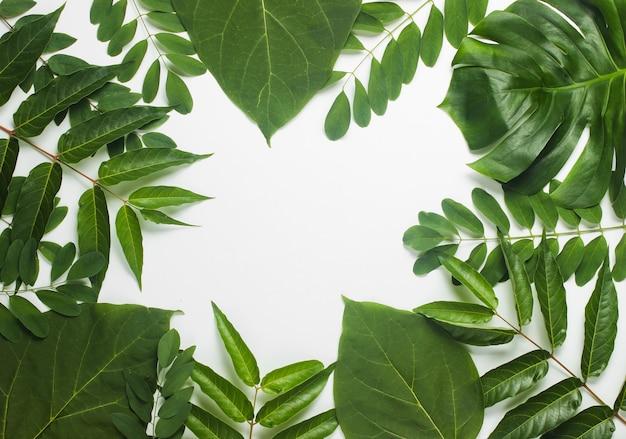 Tło z tropikalnych zielonych liści na białym papierze.