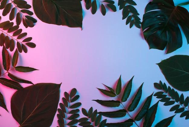 Tło z tropikalnych zielonych liści z neonowym różowym niebieskim światłem gradientowym.