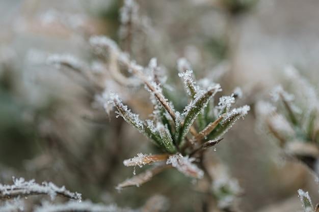Tło z zamarzniętymi roślinami pokrytymi szronem
