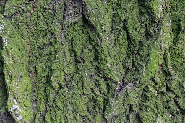 Tło z zielonego mchu