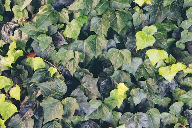 Tło z zielonymi liśćmi w naturze.