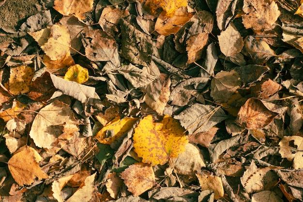 Tło z zwiędłymi jesiennymi liśćmi