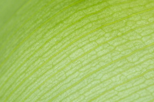 Tło zieleni lotosowi płatki