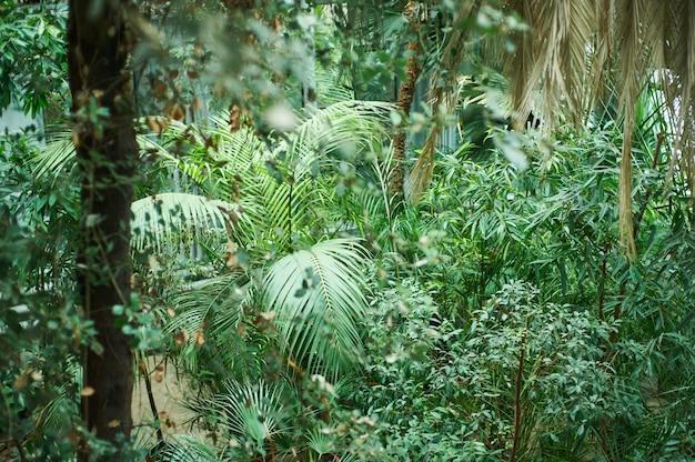 Tło zielone liście palmowe, liście tropikalnej dżungli