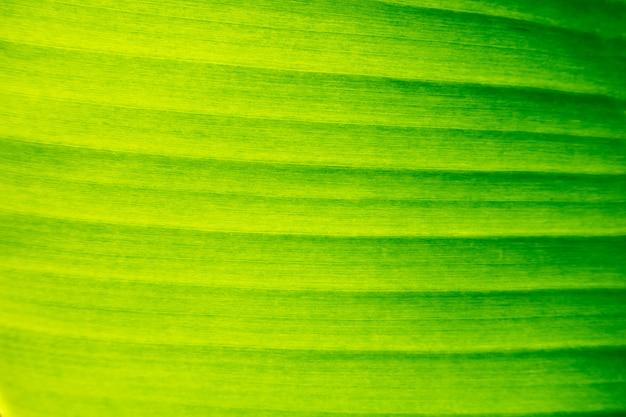 Tło zielone liście. tekstura liść