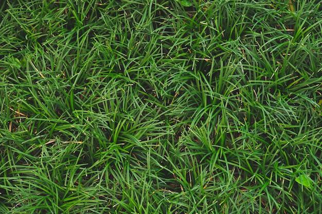 Tło zielone liście