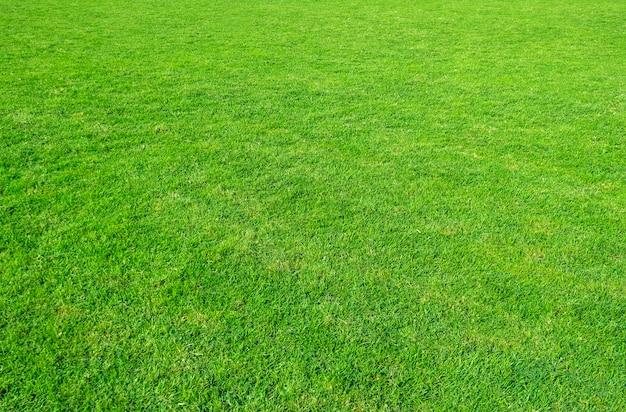 Tło zielonej trawy pole. zielona trawa wzór i tekstura. zielony trawnik na tle.