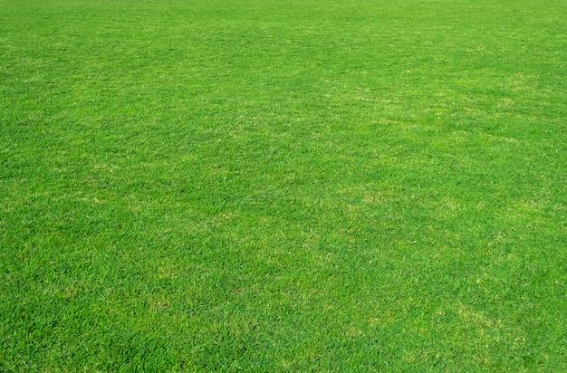 Tło zielonej trawy pole. zielona trawa wzór i tekstura.