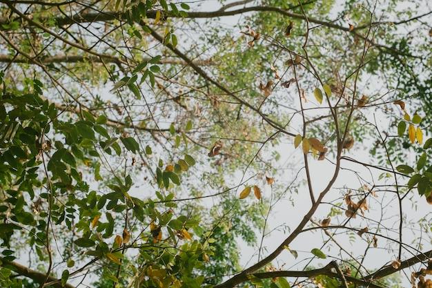 Tło zielony las - styl vintage zdjęcie i kolor vintage
