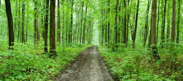 Tło zielony las w słoneczny dzień