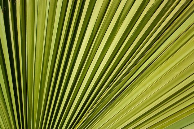 Tło zielony liść palmy tekstury
