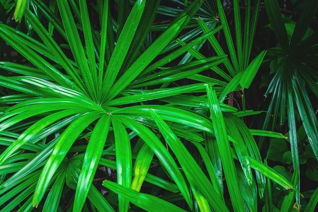 Tło zielony liść palmy