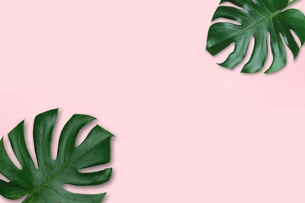 Tło zielony liść. tropikalne liście monstera na różowym tle. pojęcie natury w projektowaniu