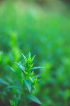 Tło zielonych liści. rozmycie tła. naturalna tekstura.