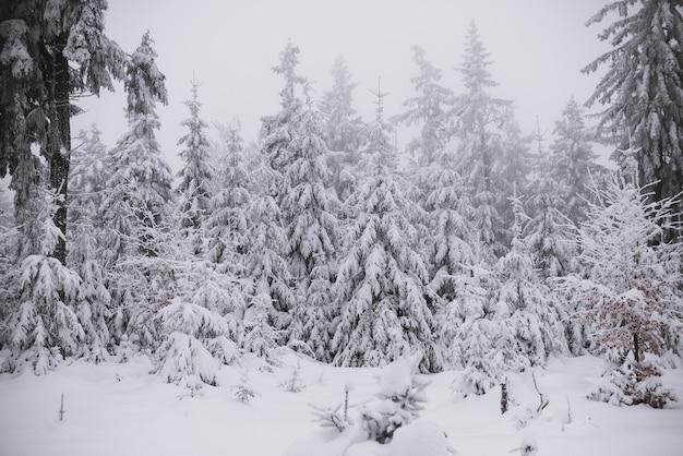 Tło zima, las w śniegu i lodzie