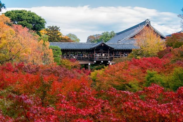 Tłumy gromadzą się w świątyni tofukuji, aby świętować jesienne święto klonów w kioto