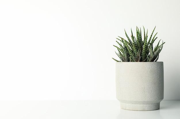 Tłustoszowata roślina w garnku na bielu stole, przestrzeń dla teksta