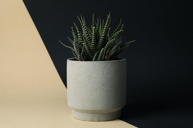 Tłustoszowata roślina w garnku na dwa brzmień tle, przestrzeń dla teksta
