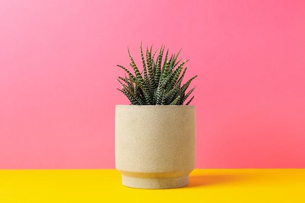 Tłustoszowata roślina w garnku przeciw różowemu tłu, przestrzeń dla teksta